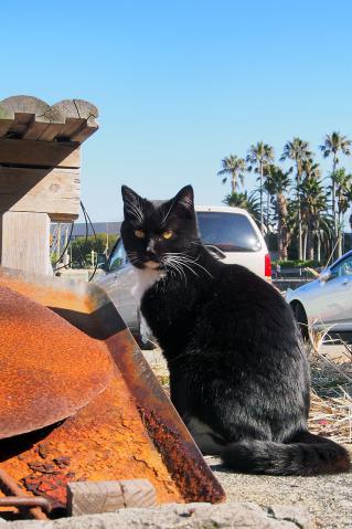 黒仮面の猫