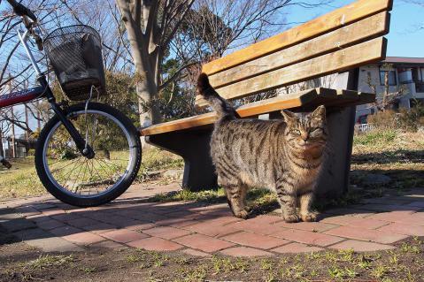 ベンチの下のキジトラ
