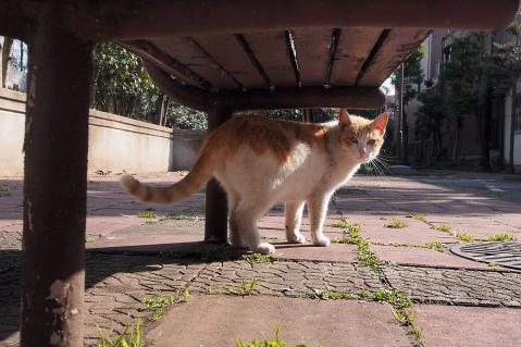 最初に会った茶白猫