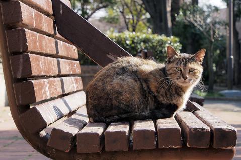 ベンチの上のムギワラ