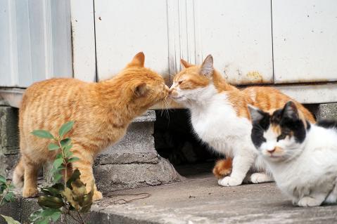 猫の鼻キッス