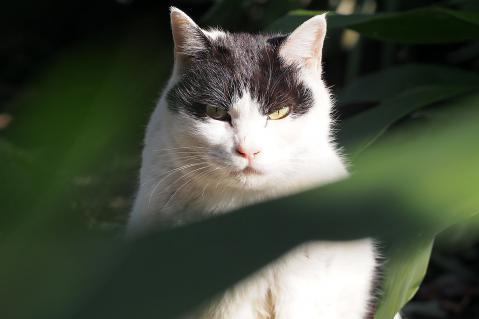 白黒猫も満足