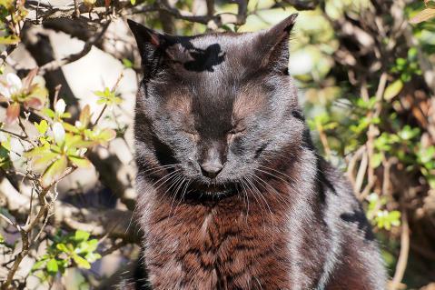 黒猫の頭に葉っぱの影