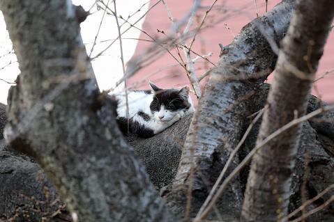 木の上のハチワレ