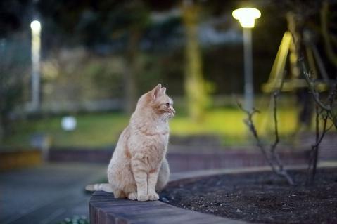 夜の公園に佇む茶トラ