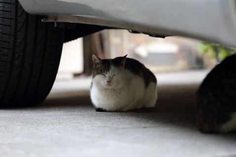 車の下でお休み