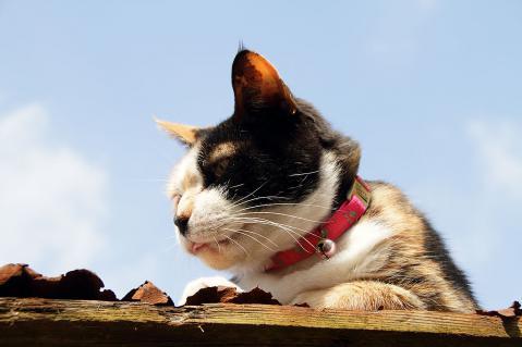屋根の上から眺める猫