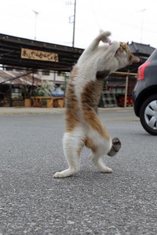 じゃらしに飛びつく猫