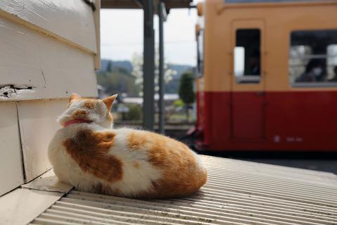 電車を見つめるナオキ