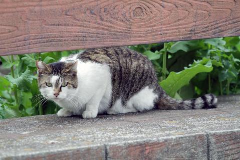 下りて来た猫