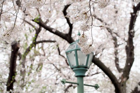 桜とガス塔