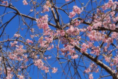 青空に映えるピンク色