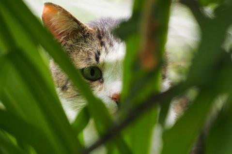 草むらからのぞく猫