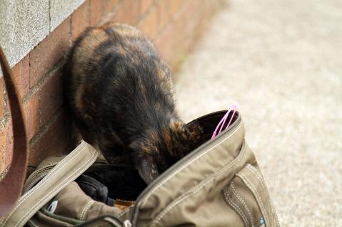 バッグを漁る猫