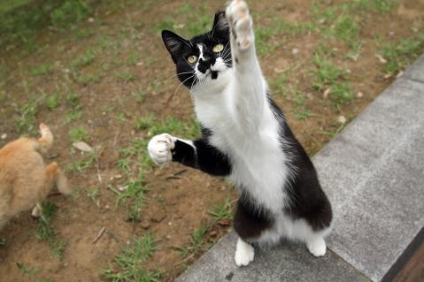 飛びつく猫.jpg