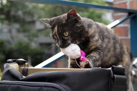 猫じゃらしを強奪