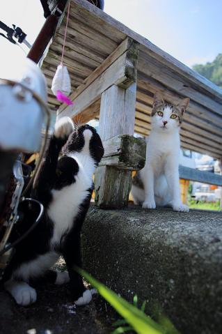 じゃらしで遊ぶ猫達