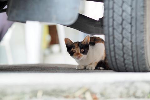 三毛の仔猫