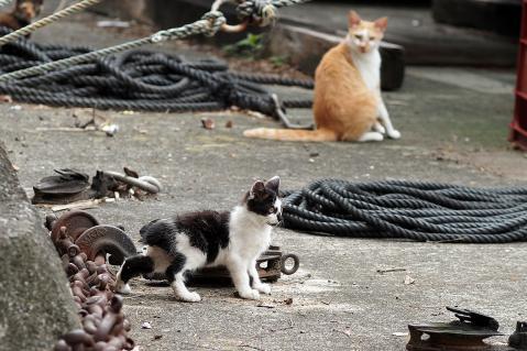 黒白の仔猫