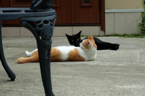 白茶と黒猫