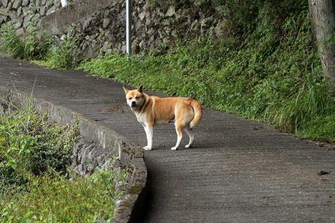 山中の野犬