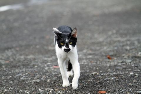 近づいて来る黒ひげ猫