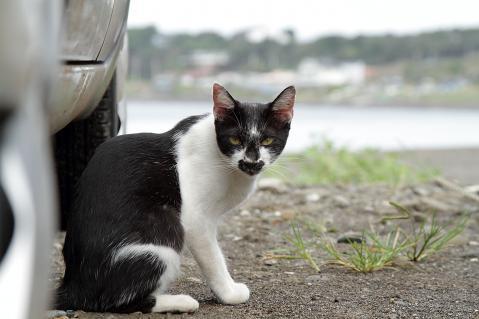 様子を見る黒ヒゲ猫