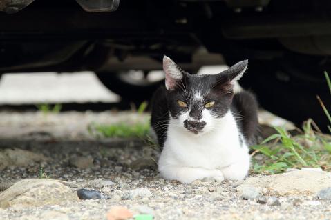 黒ヒゲ猫のお座り