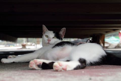 日陰でお休みのお母さん猫