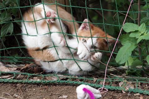 おもちゃで遊ぶ仔猫