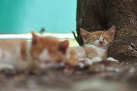 一休みする仔猫達