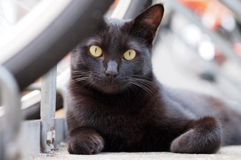 眺める黒猫