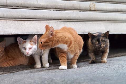 出て来る猫達