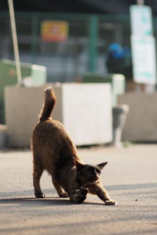 サビ猫の伸び