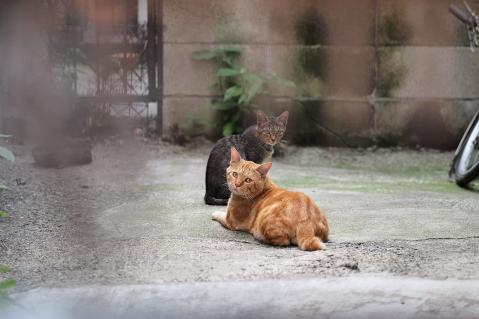 敷地奥の猫
