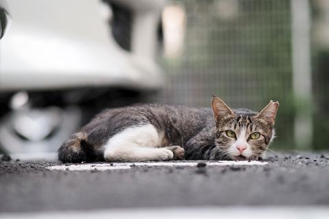 駐車場で寝転ぶ猫
