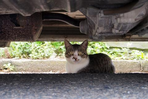 車の下の猫