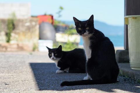 日陰で寛ぐ猫達