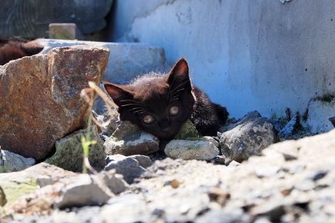 黒猫のお休み