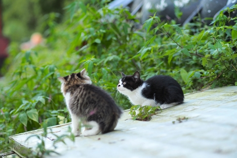 2匹の仔猫