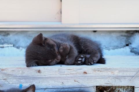 仔猫お休み中