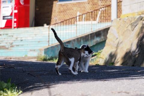 猫のご挨拶