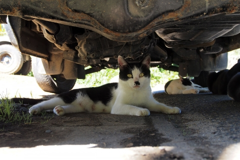 車の下で暑さしのぎ