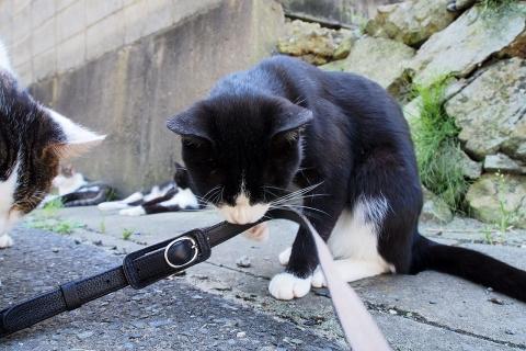 ストラップで遊ぶ猫