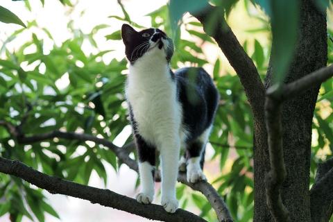 木登りニャッキー