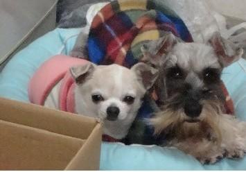 うちの可愛い2匹の元保護犬