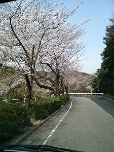 ロイヤル桜5