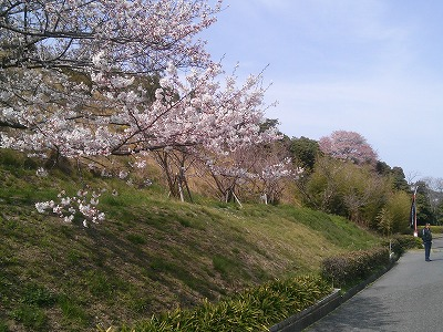 ロイヤル桜2