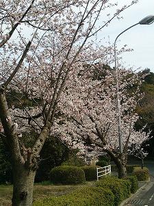 ロイヤル桜4