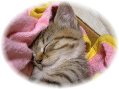 ずっと寝てる。。。